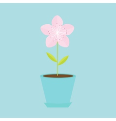 Sakura flower in the pot japan blooming cherry vector