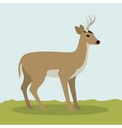 Colorful deer animal design vector
