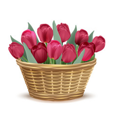 Full wicker basket with red tulips vector