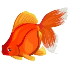 Golden fish on a white background vector