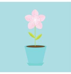 Sakura flower in the pot Japan blooming cherry vector image vector image
