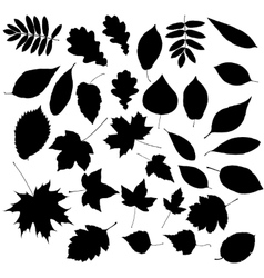 Autumn leafs silhouettes vector