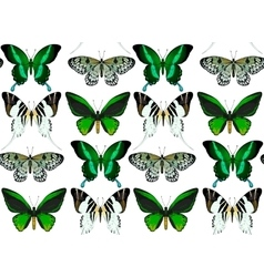Exotic butterflies collection vector