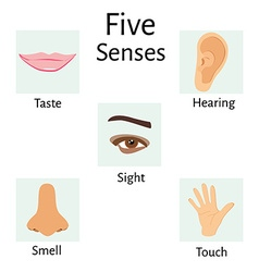 Five senses vector image vector image