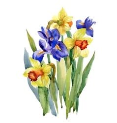 Watercolor Summer Garden Narcissus Blooming Flower vector image vector image