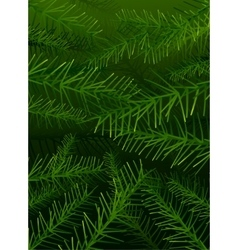 tree pine branches background vector image
