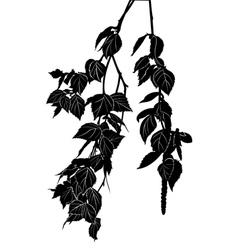 birch tree branch vector image
