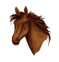 Horse animal muzzle sport racehorse icon vector