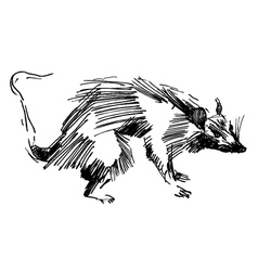 Rat hand drawing black and white sketch vector