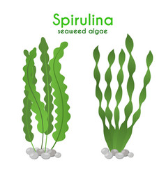 spirulina algae seaweedcartoon flat style vector image vector image