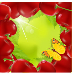 Frame of cherry vector