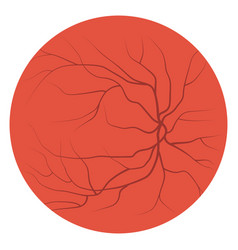 Eye veins and vessels vector