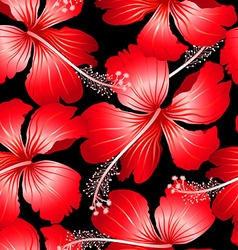 Red tropical hibiscus flowers with black vector