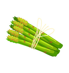 Bunch of asparagus crops food item rich in vector