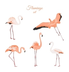 Set of isolated pink flamingos on white background vector