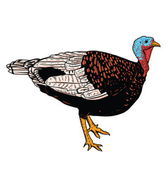 turkey isolated on white background vector image vector image