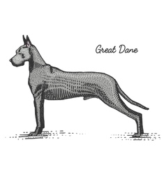 Dog breed engraved hand drawn vector
