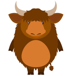 Cute yak on white background vector
