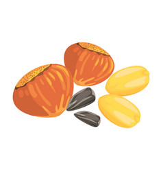 Hazelnuts peanuts and sunflower seeds food item vector
