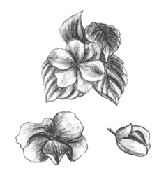 Hand drawn balsams at different stages of growth vector