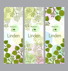 herbal tea collection linden banner set vector image vector image