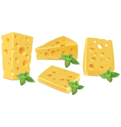 Cheese and basil vector image