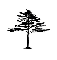 Coniferous trees silhouettes vector