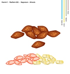 Almonds with vitamin e b2 and minerals vector