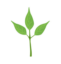 green tree leaves vector image