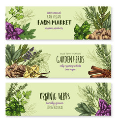 sketch banners of spice and herb seasonings vector image vector image