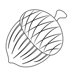 an acorn with a hatdifferent kinds of nuts single vector image