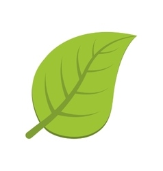 Leaf nature plant green icon graphic vector