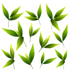 Set of beautiful green leaves vector