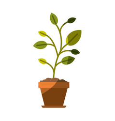 Colorful silhouette of plant in flower pot without vector
