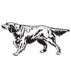 Decorative english setter vector