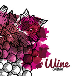 Best wine grapes fruit vector
