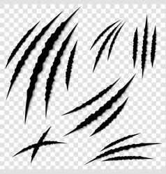 creative of claws paw vector image
