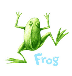 Green frog painted in engraving style vector