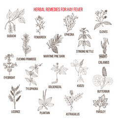 Best herbal remedies for hay fever vector