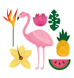 Tropical flamengo hibiscus pineapple watermelon vector