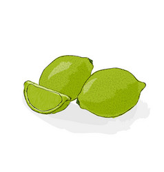 green and sour lime still-life from fruit hand vector image