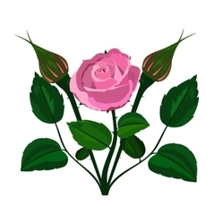 bush rose on a white background vector image vector image