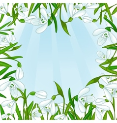 Floral background with white snowdrops eps10 vector image