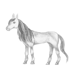 Hand drawn horse pencil drawing of mare vector