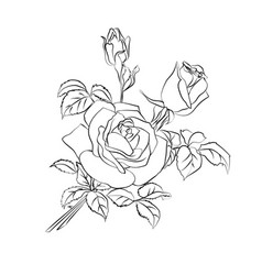rose sketch on white background vector image