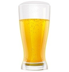 Lager beer in glass vector