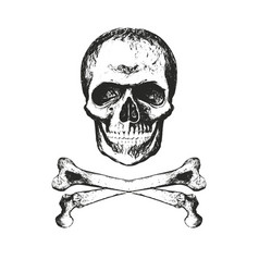 skull with texture vector image vector image