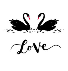 Inscription love a couple of black swans vector