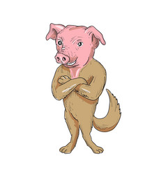 pig dog standing arms crossed cartoon vector image