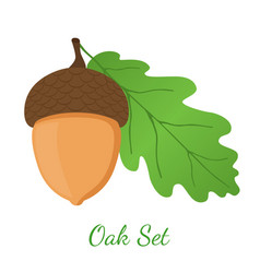 acorn leaf oak nut seed cartoon style vector image